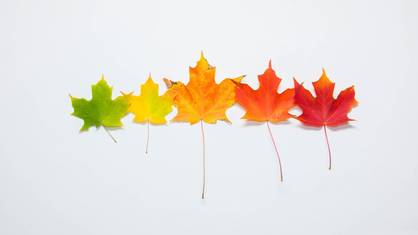 fall_gradient-wallpaper-1366x768